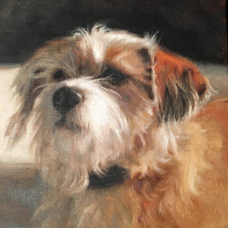 astro dog portrait