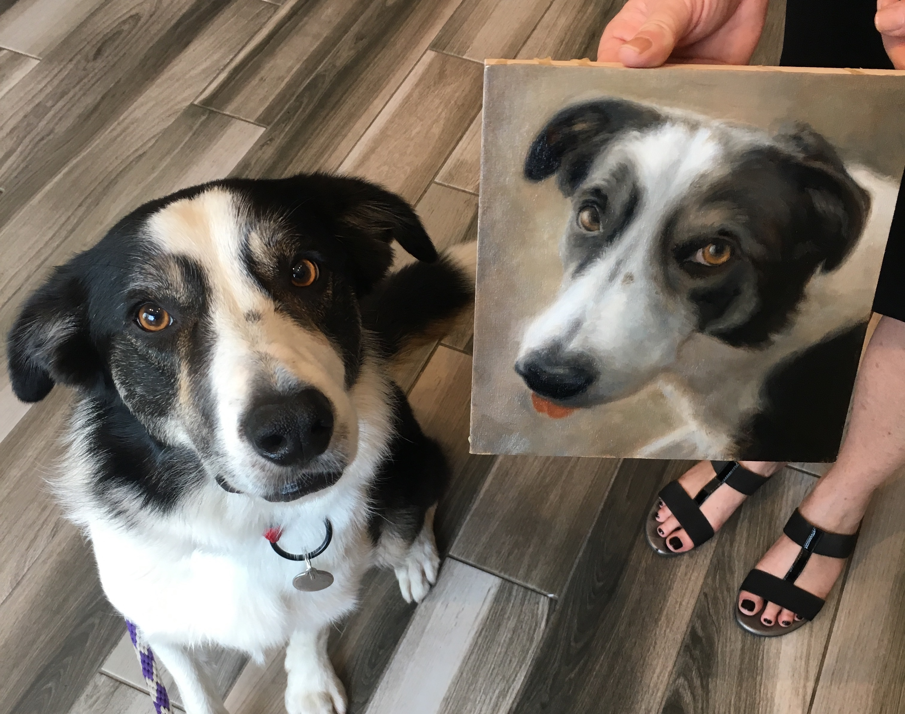 Example of pet dog portrait
